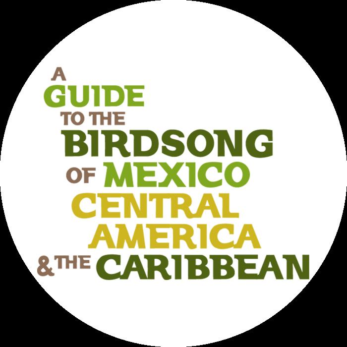 A Guide to the Birdsong (shikashika) Profile Image | Linktree