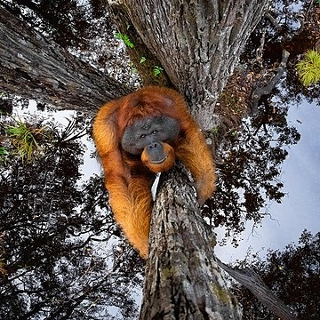 World nature photography awards – in pictures