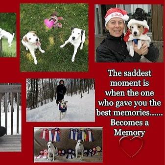 @accesholistic Élevage Swymbridge Jack Russell Terriers 1998/2017 Link Thumbnail   Linktree