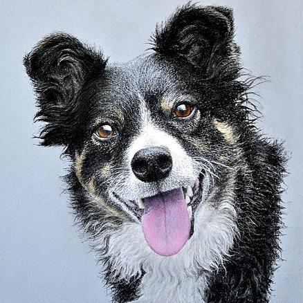 Detailed realistic pet portraits