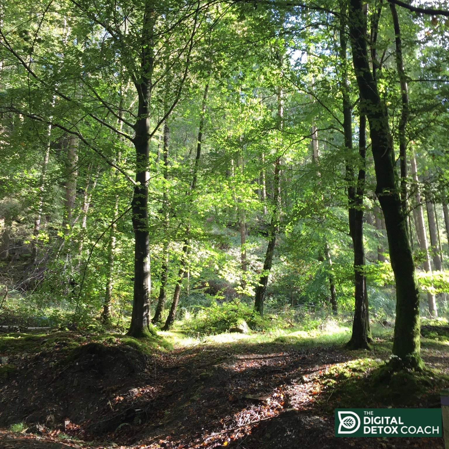 The Digital Detox Coach Why Forest Bathing is the Perfect Digital Detox Link Thumbnail | Linktree