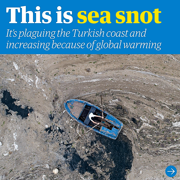 @guardian 'Sea snot': Turkish minister announces plan to tackle slimy scourge Link Thumbnail | Linktree