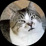 @Aslanscats Profile Image | Linktree