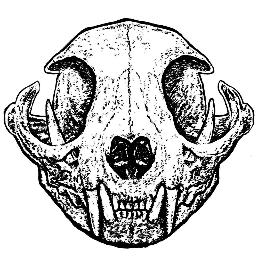 vvilczy (vvilczy) Profile Image   Linktree