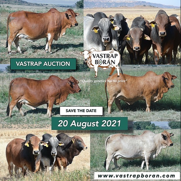 2021 Vastrap Auction