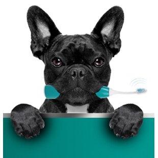Emmi Pet- Die wirkungsvolle Zahnreinigung und Maulhygiene für Ihr Tier