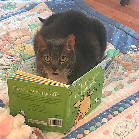 Katie's Adventures in Bookland Get free books! Link Thumbnail | Linktree