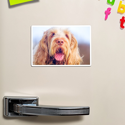 Spinone Magnets