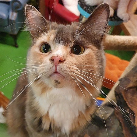 Kitty Cafe Subscribe to You Tube Link Thumbnail   Linktree