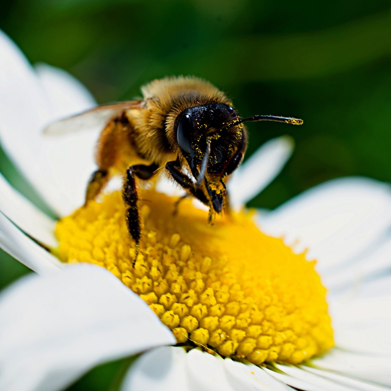 #tlugreenmonth2021 19.04.2021: We think we need to talk about bees (find the video here) Link Thumbnail | Linktree