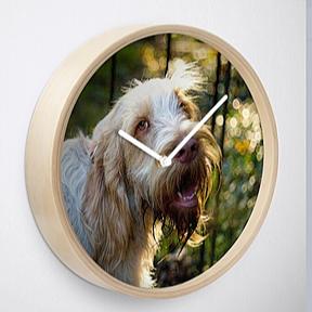 Spinone Clocks