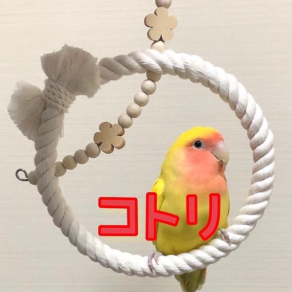 @kotorinoomocha Profile Image | Linktree
