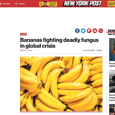 My work featured on New York Post