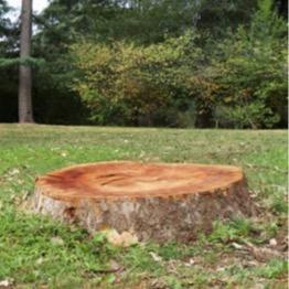 PMG Tree Stump Removal