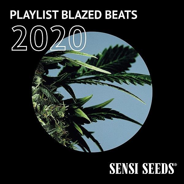 Sensi Seeds Flagship Store Playlist - Blazed Beats 2020 Link Thumbnail   Linktree
