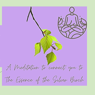 Guided Meditation to connect to the Silver Birch tree