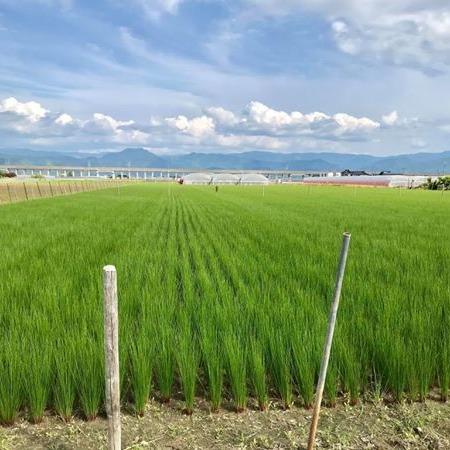 @foodboxjp 【畳・花ござの原材料】国産い草ができるまで Link Thumbnail   Linktree