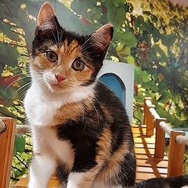 Kitty Cafe Rescue Site Link Thumbnail   Linktree