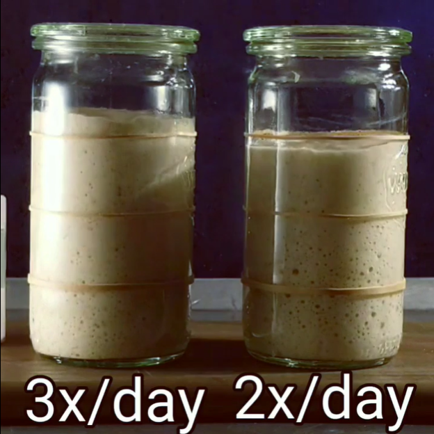 Feeding Starter 2X Per Day