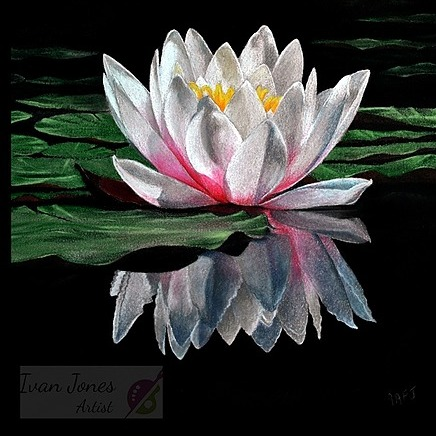 Waterlily A4 Mounted Prints