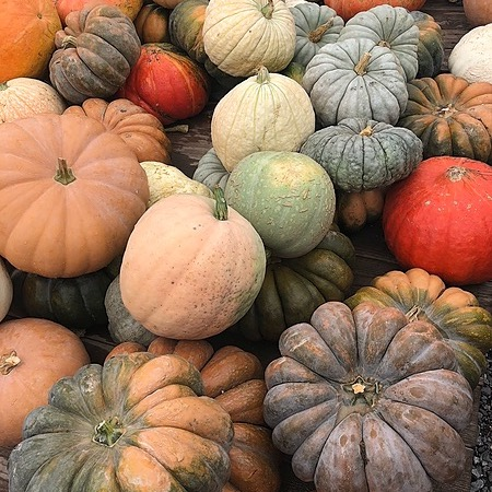 Harmons Grocery Local Grant Winners 2021 Link Thumbnail | Linktree