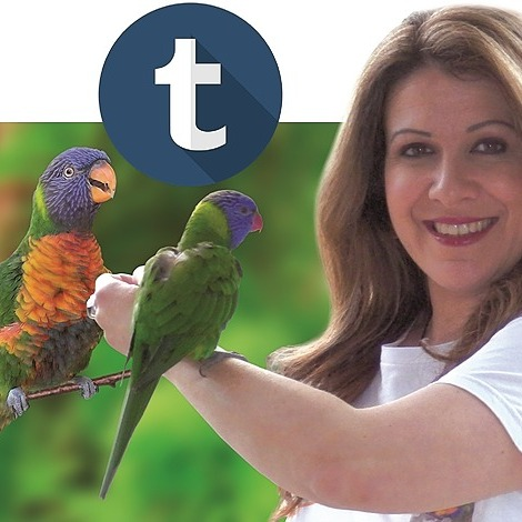 Welcome to my Links! Tumblr- Let Companion Birds Fly Link Thumbnail   Linktree