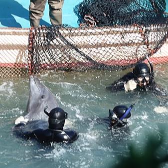 @eco.japan 【署名】End Dolphin Hunting in Taiji / 太地町のイルカの追い込み漁をやめてください Link Thumbnail | Linktree