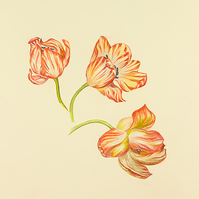 Paula Kuitenbrouwer Free Newsletters & Coupon Codes: Tulips, Koi, Mandarin ducks & Pumpkins Link Thumbnail | Linktree