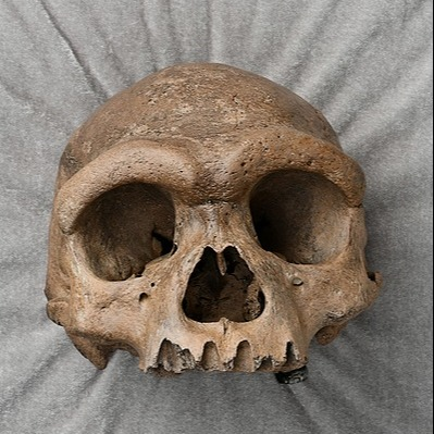 @guardian Massive human head in Chinese well forces scientists to rethink evolution Link Thumbnail   Linktree