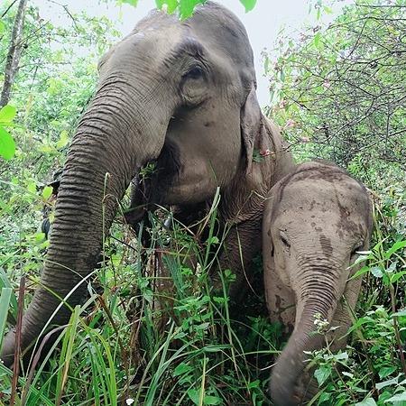 @GentleGiantsNonProfit Sponsor an Elephant Link Thumbnail | Linktree