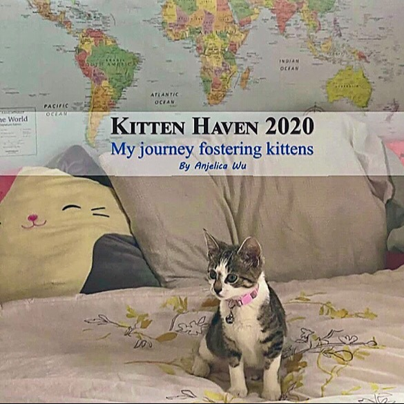 Give Me Shelter Project Kitten Haven 2020: My Journey Fostering Kittens by Anjelica Wu Link Thumbnail | Linktree