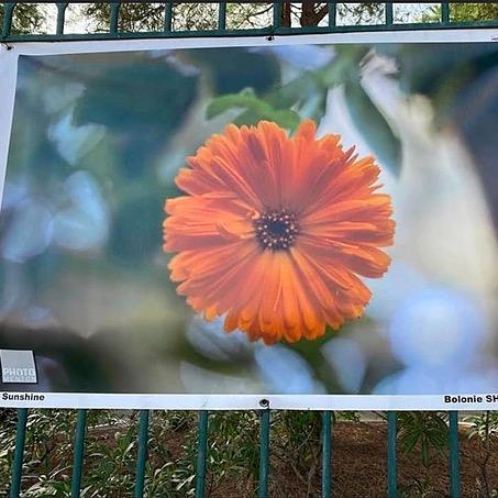 Bolonie Photo menton 2019/ Parc des Oliviers 2020 Link Thumbnail   Linktree