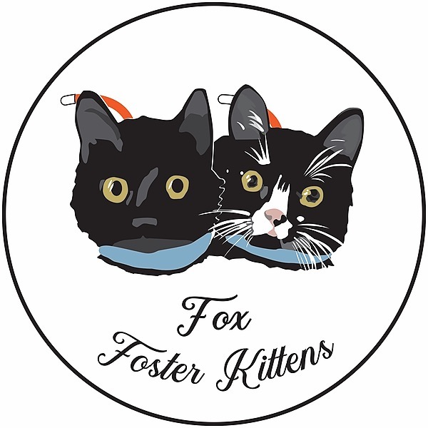 @Foxfosterkittens19 Profile Image | Linktree