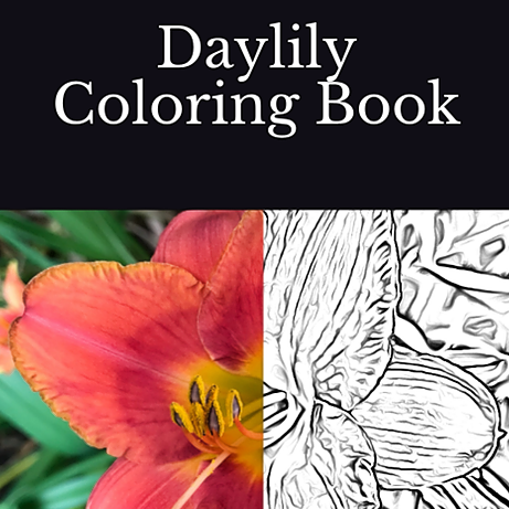 Heidi Thorne Daylily Coloring Book Link Thumbnail | Linktree