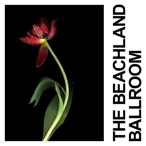 @idlesband Listen to The Beachland Ballroom Link Thumbnail | Linktree