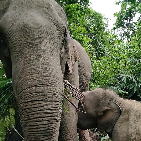 @GentleGiantsNonProfit Om Koi Baby Elephant Nursery Link Thumbnail | Linktree