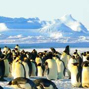 Südpol und Antarktis Kreuzfahrt