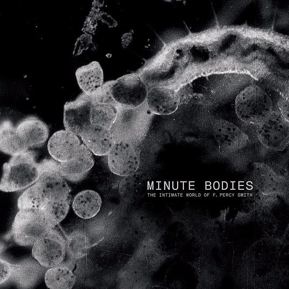 2017 - Tindersticks feat Ott & Belhom - Minute Bodies - City Slang
