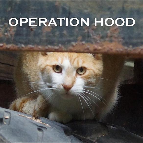 Operation Hood Inc. (OpHood) Profile Image | Linktree