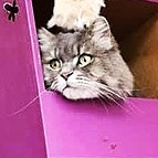 Kitty Cafe Weekly MEWS letter Link Thumbnail   Linktree