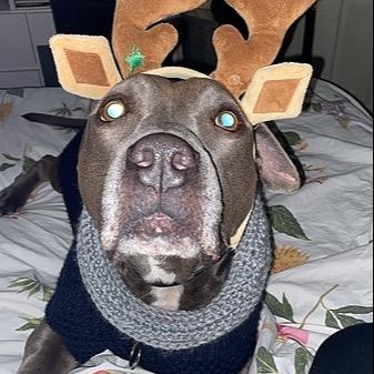 Saving San Diego Dogs (StxUrgentPets) Profile Image   Linktree