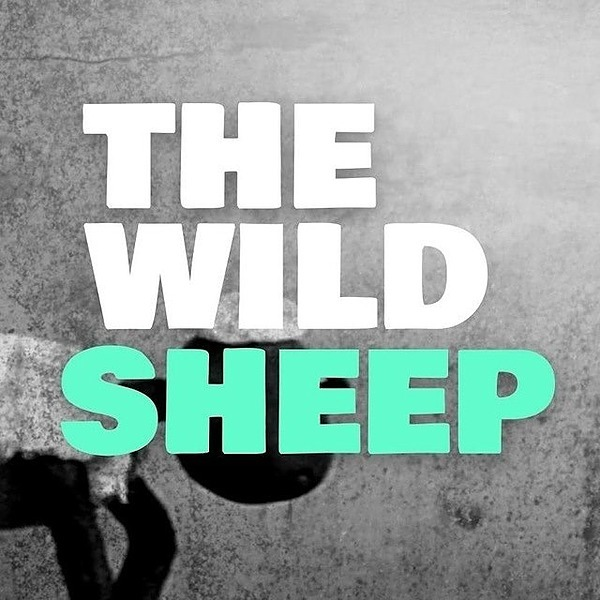 Channel Overview THE WILD SHEEP NEWS