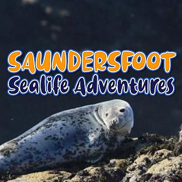 @saundersfootseafishing Profile Image | Linktree