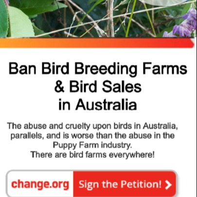 Welcome to my Links! Petition to Ban Bird Breeding/Sales in Australia Link Thumbnail   Linktree