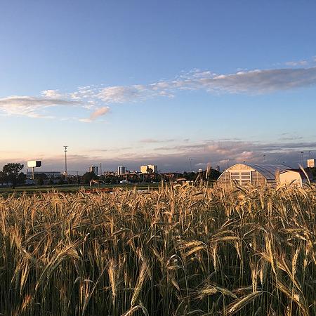 The OSU Student Farm (Studentfarmosu) Profile Image | Linktree