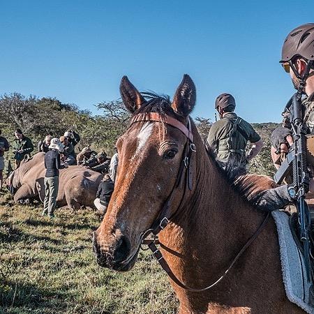 Mounted Anti Poaching Units Professional Development Program