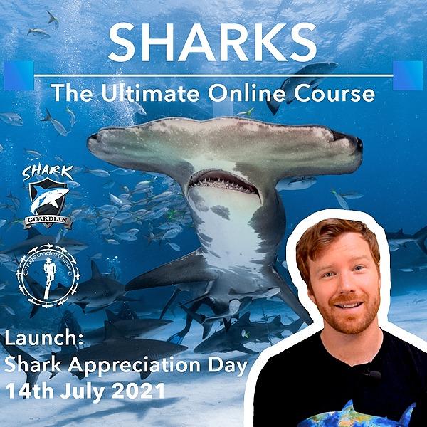 @undertheseaart The Ultimate Online Sharks Course  Link Thumbnail | Linktree