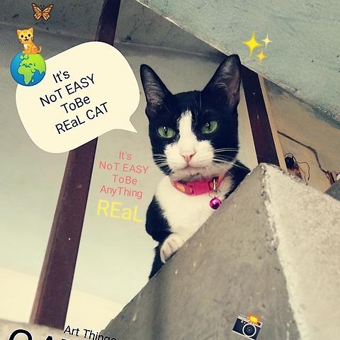 GATchee GallerY GATchee_cat : Instagram Link Thumbnail | Linktree