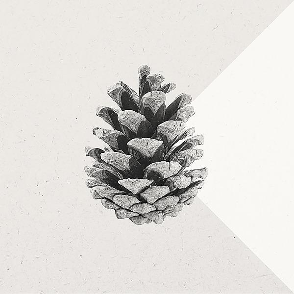 @saisonsmusique Profile Image | Linktree