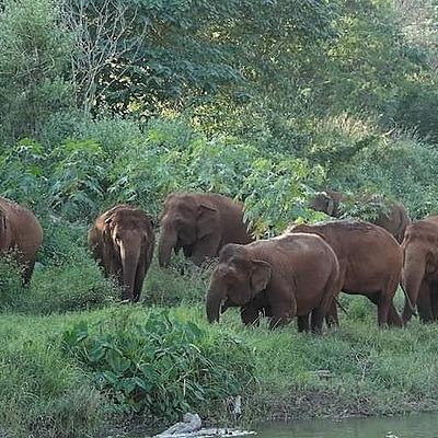 @GentleGiantsNonProfit Mixed fates for captive elephants sent back to villages amid Thai tourism collapse - Mongabay Link Thumbnail | Linktree